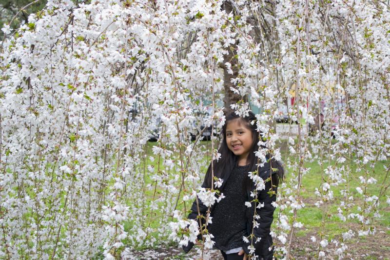 CherryBlossom2016-JCRomano-6