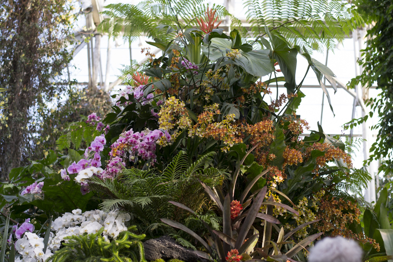 New York Botanical Garden Orchid Show 2016 Wowee